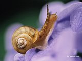 Insects on plants & Flowers20 pics